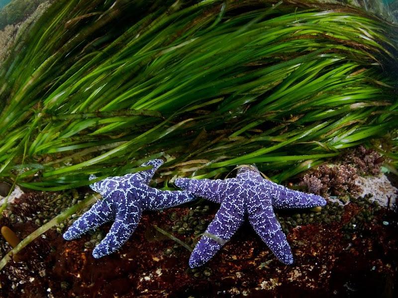 sea-stars-eel-grass_37824_990x742.jpg