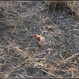 Hühner am Glan