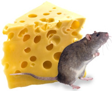 8020_Mouse_Cheese