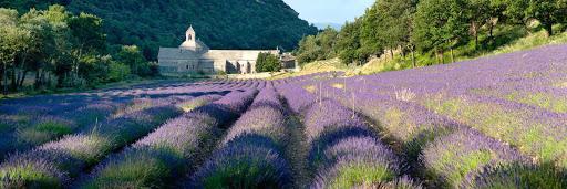 Provence-France-Senanque-Abbey-2 - The lavender fields of Sénanque Abbey, in Provence, France.