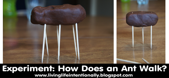 Science Experiment for Kids - How does an Ant Walk