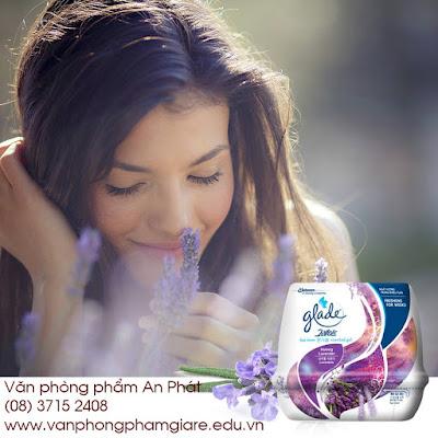 Sáp thơm Glade hoa oải hương (lavender)