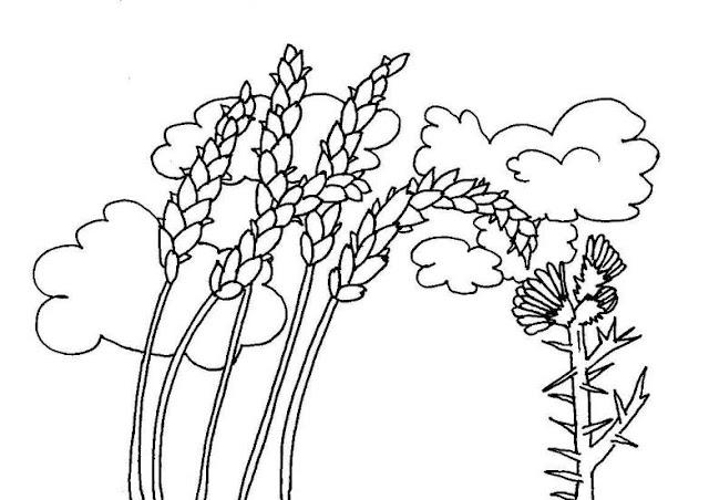 Dibujo Del Grano De Trigo: Imagenes De Espigas De Trigo Para Colorear