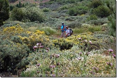 5814 Pico las Nieves-Temisas