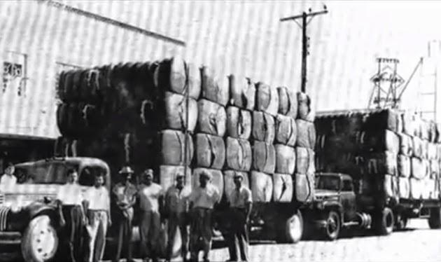 Cotton Trucks Ciudad Miguel Aleman, Tamaulipas.jpg