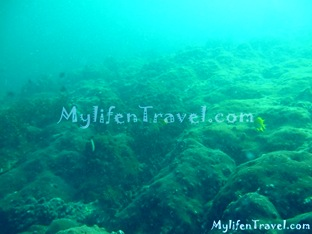Koh Lipe Diving 73