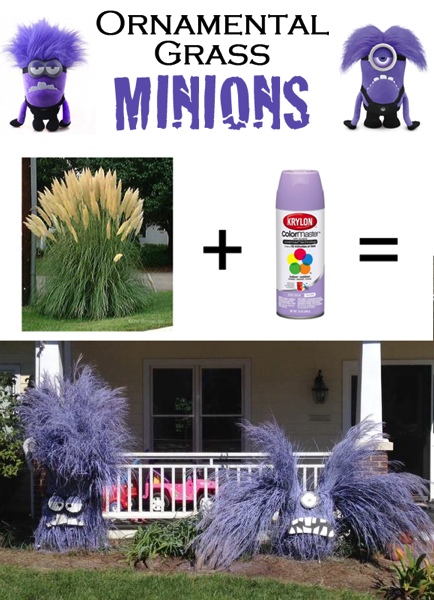 Ornamental grass minions