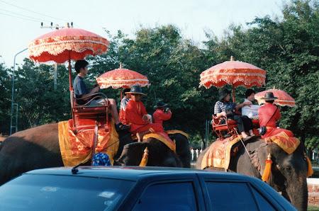 La Ayutthaya procesiune elefanti
