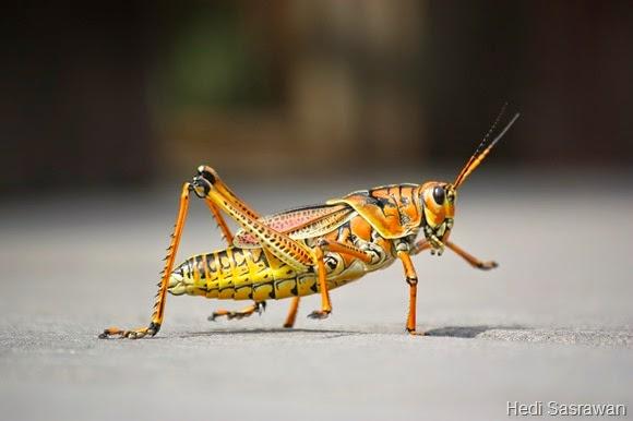 7 Ciri-Ciri Kingdom Animalia | Hedi Sasrawan