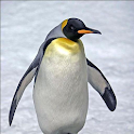 SILLY PENGUIN icon