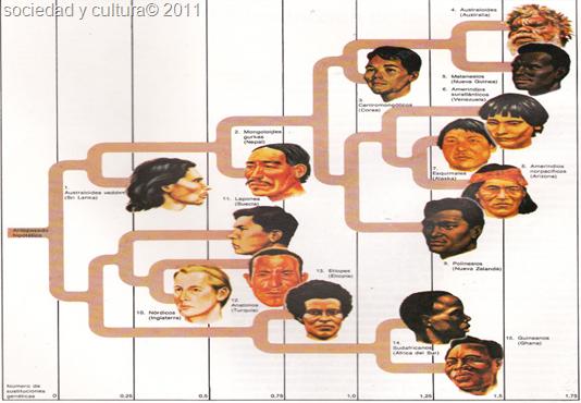 tipos de razas humanas