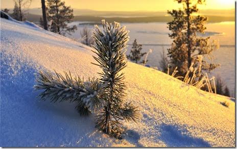 imagini de iarna-zapada