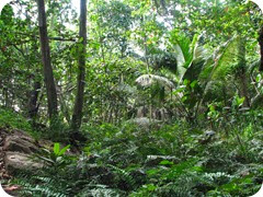 foresta_tropicale1