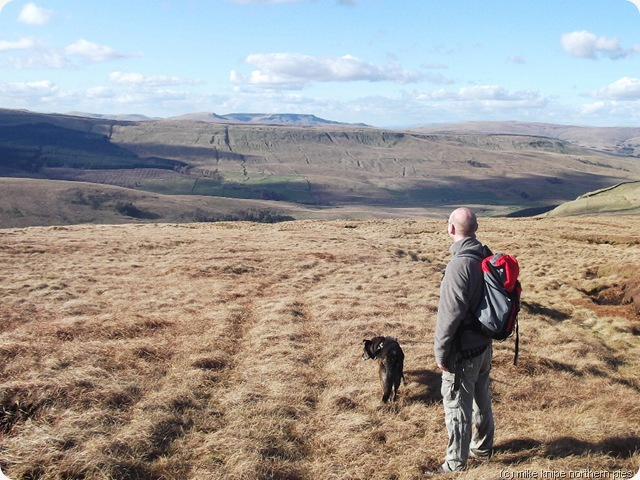 the nephew, the pooch and the wild boar fell