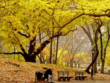 Fall in Central Park NY