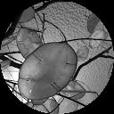 Image Google de scillia