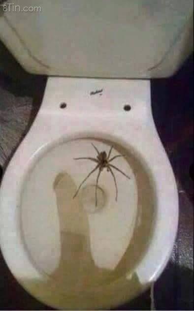 Con nhện này có độc không mấy thím?