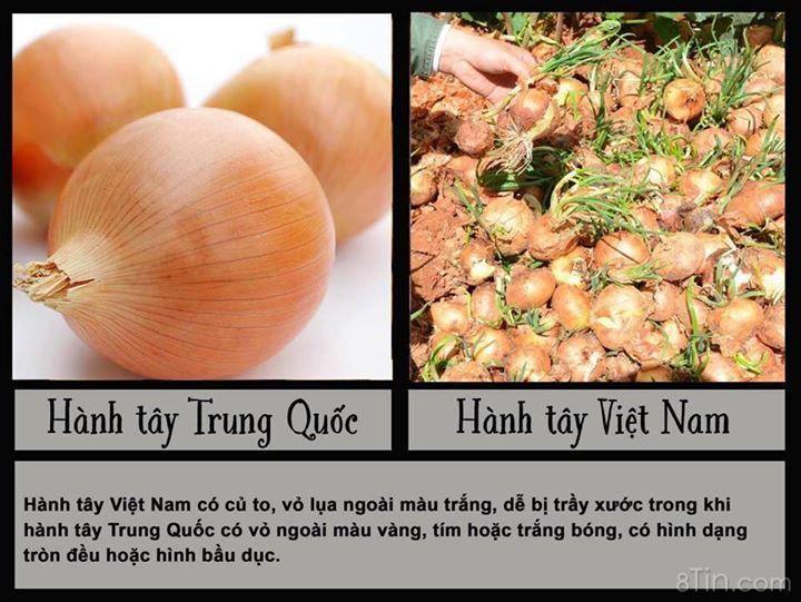 Cách phân biệt rau củ quả Trung Quốc & Việt Nam.