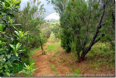 7965 Circular a Firgas R3-Pico del Rayo