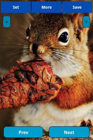 娛樂必備APP下載 Squirrel Wallpapers 好玩app不花錢 綠色工廠好玩App