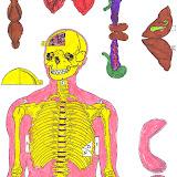 Esqueleto-3.jpg
