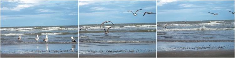 more chasing seagulls