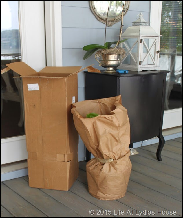 fiddle leaf fig tree delivery b