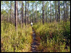 Florida Trail Hike 2
