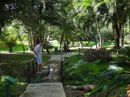 Vacanta Republica Dominicana: Prin gradina hotelului
