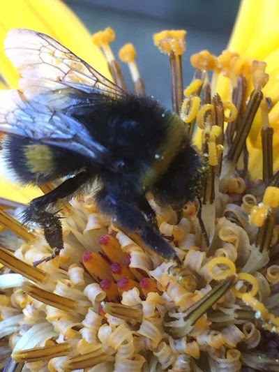 Please 'LIKE' this super photo of pollen by Margaret Jacklin