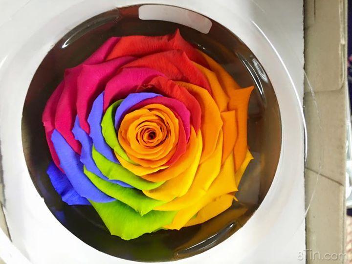 Comment tag bạn nào bạn muốn tặng hoa Vĩnh Cửu này để