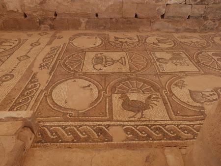 Mozaicuri - Petra