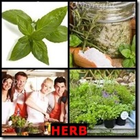 HERB- 4 Pics 1 Word Answers 3 Letters