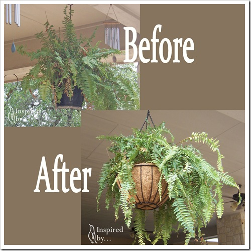 Before_After_Ferns