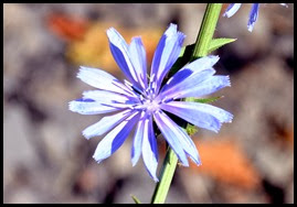 01f4 - Gorge Trail - wildflowers along the trail