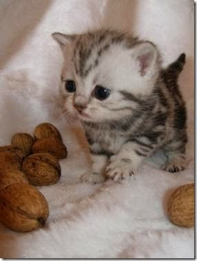 Food that your cat eats and should not be nuts in general are harmful for our pets since they can generate problems in her nervous system publicscrutiny Image collections