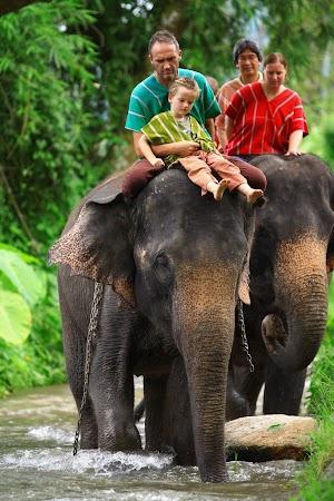Imagini Thailanda: Plimbare pe elefant, Patara, Thailanda