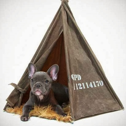 Tent for your dog