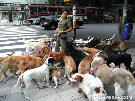 image 08 dog walker
