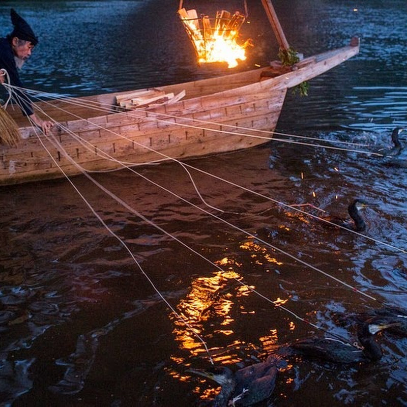 Ukai - The Japanese Art of Cormorant Fishing