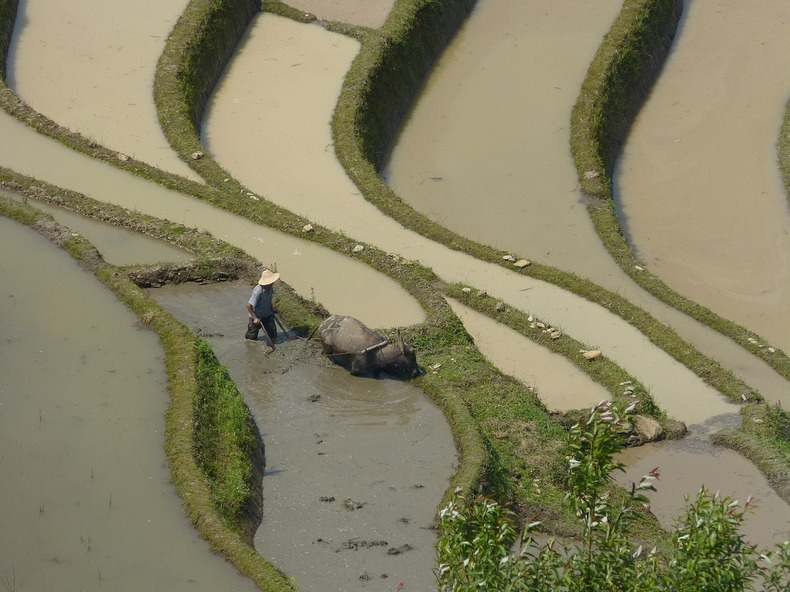 yunnan-rice-terraces-8