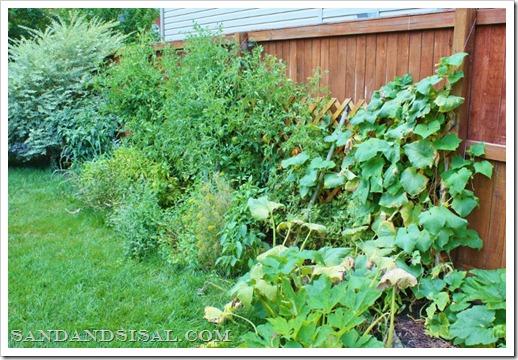 Grow an organic garden
