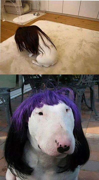 Trước và sau khi cắt tóc. :3