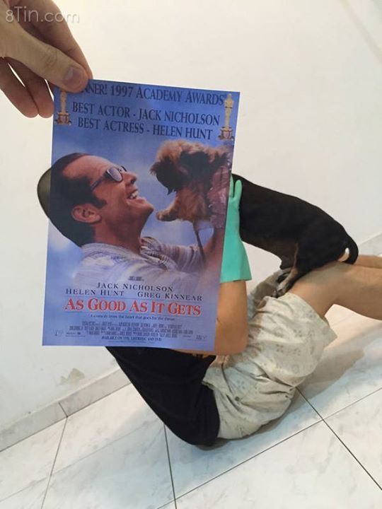 """Bộ ảnh hài hước của đội quân chó """"trá hình"""" poster phim :))"""