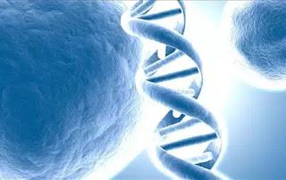 Cấu trúc gene di truyền chính là chìa khóa trường sinh bất tử.