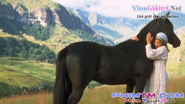 Chú Ngựa Ô Choai - The Young Black Stallion