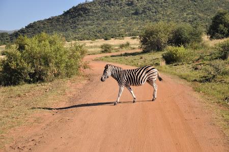 8. Safari Africa de Sud.JPG