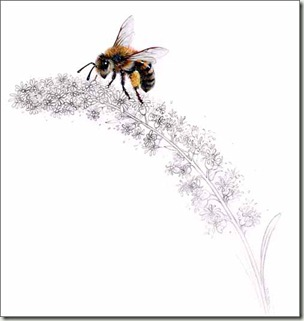 marty's honey bee bg