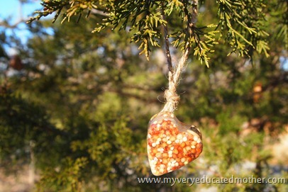 www.myveryeducatedmother.com Ice Birdfeeder