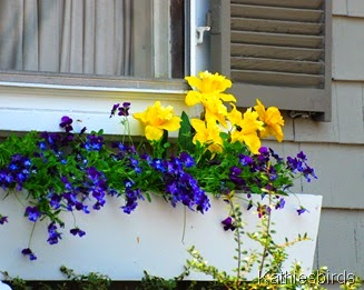 9. flower box andover mass-kab